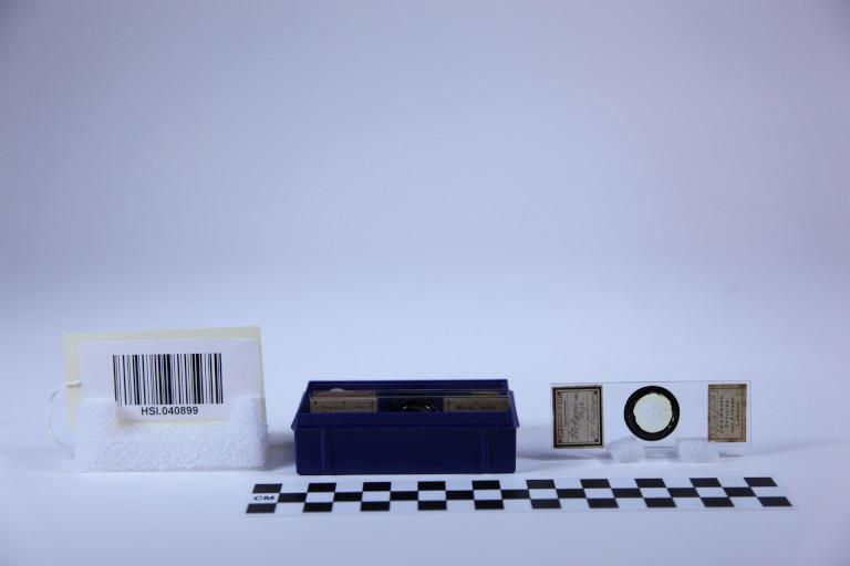 Microscope slides of sediment